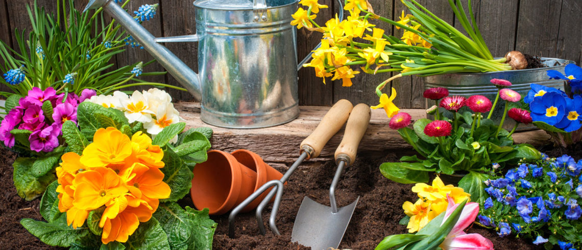 Landscaping with flowers, tools and soil